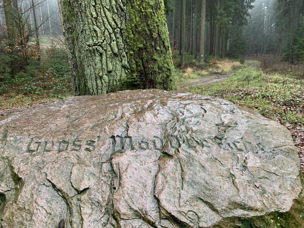Erfolgreiche CDU Wanderung im Rosengarten